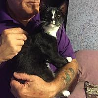 Adopt A Pet :: Corkie - Rochester, MN
