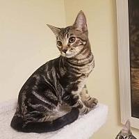 Adopt A Pet :: Luke Cage - Edmond, OK