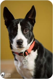 Border Collie Mix Dog for adoption in Portland, Oregon - Monty