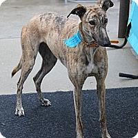 Adopt A Pet :: Jane - Philadelphia, PA