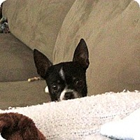 Adopt A Pet :: Bailey - Poulsob, WA