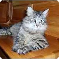 Adopt A Pet :: Marnie - Arlington, VA