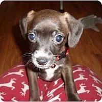 Adopt A Pet :: Minnie - Glen Burnie, MD
