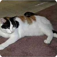 Adopt A Pet :: Jewel - Colmar, PA