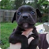 Adopt A Pet :: Pez - Orlando, FL