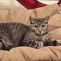 Adopt A Pet :: Tammy - Santa Monica, CA