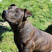 Adopt A Pet :: Petey - Lodi, CA