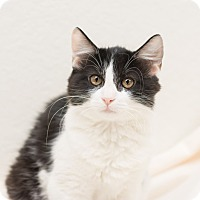 Adopt A Pet :: Lulu II - Fountain Hills, AZ