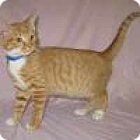 Adopt A Pet :: Jasper - Powell, OH
