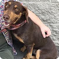 Adopt A Pet :: Essence: in Fairfax - Cincinnati, OH