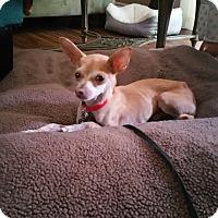 Adopt A Pet :: Cysco - Studio City, CA