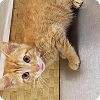 Adopt A Pet :: A436034 - San Antonio, TX