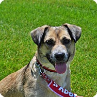 Adopt A Pet :: Ariel - Gretna, NE