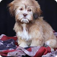 Adopt A Pet :: Julia - SAN PEDRO, CA