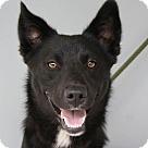 Adopt A Pet :: Julius