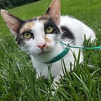 Adopt A Pet :: Sierra - Oakland, MI