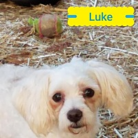 Adopt A Pet :: Luke - Lakeport, CA