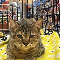 Adopt A Pet :: Scout - Alpharetta, GA