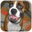 Photo 1 - Boxer Dog for adoption in Fort Bragg, California - Ana