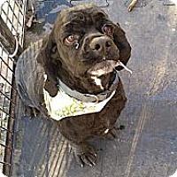 Adopt A Pet :: Doc - Santa Barbara, CA