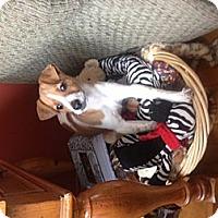 Adopt A Pet :: freya - Wanaque, NJ