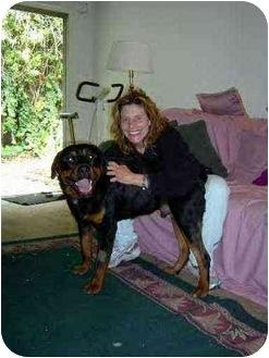 Rottweiler Dog for adoption in Santa Barbara, California - Romeo!