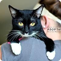 Adopt A Pet :: Jamie - Edwardsville, IL