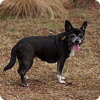 Adopt A Pet :: Mandy - Pinehurst, NC