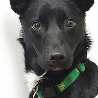 Adopt A Pet :: Janelle Monae - Jersey City, NJ