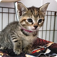 Adopt A Pet :: Rosemary - Burgaw, NC