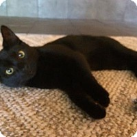 Adopt A Pet :: Skittles - Kohler, WI