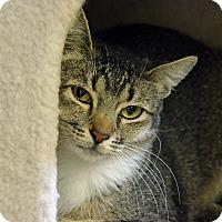 Adopt A Pet :: 10310018 CHERRY - Brooksville, FL