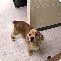 Adopt A Pet :: Huck -Adopted! - Kannapolis, NC