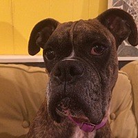 Adopt A Pet :: Merida - Austin, TX