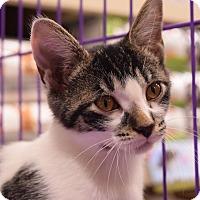 Adopt A Pet :: Peanut - Flushing, MI