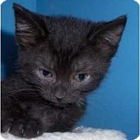 Adopt A Pet :: Jenna - Richmond, VA