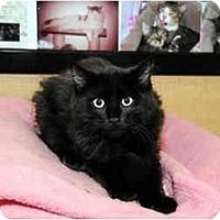 Adopt A Pet :: Onyx - Farmingdale, NY
