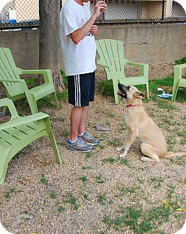 German Shepherd Dog Mix Dog for adoption in Philadelphia, Pennsylvania - Stacy