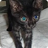 Adopt A Pet :: Osiris and Isis - Dallas, TX