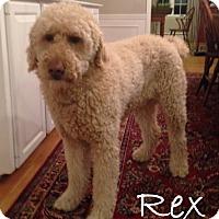 Adopt A Pet :: Sutton MA - Rex - W. Warwick, RI