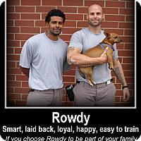 Adopt A Pet :: Rowdy - Indian Trail, NC