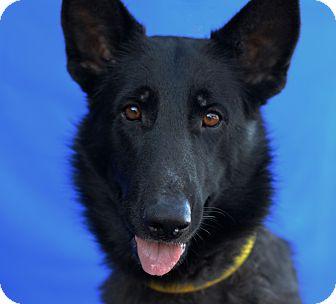 German Shepherd Dog Mix Dog for adoption in LAFAYETTE, Louisiana - ROXIE