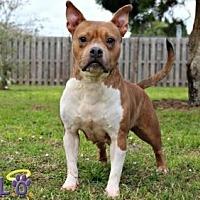 Adopt A Pet :: Josie - Sebastian, FL