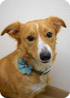 Cattle Dog Mix Dog for adoption in Dublin, California - Sweetie