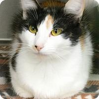 Adopt A Pet :: Chilli - Webster, MA