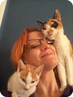 Calico Cat for adoption in Arlington, Virginia - Joy & her kitten-ADOPTED