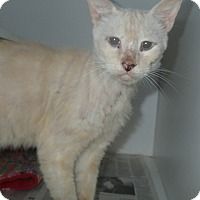 Adopt A Pet :: White Boy - Newport, NC