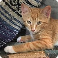 Adopt A Pet :: Fidget - Brooklyn, NY