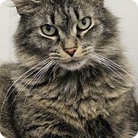 Adopt A Pet :: Aurora - Dunkirk, NY