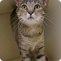 Adopt A Pet :: Gracie - Verona, WI